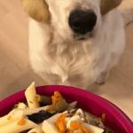 Receta de macarrones para perros