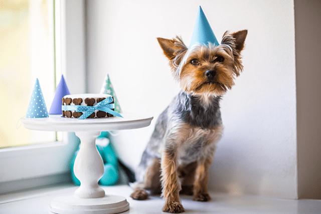 hacer pastel casero para perros