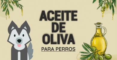 mi perro puede comer aceite de oliva