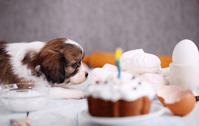 101 Recetastartas Para Perros 2019