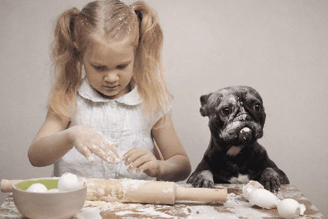 Como elaborar cupcakes para perros