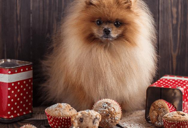 mi perro puede comer cupcakes