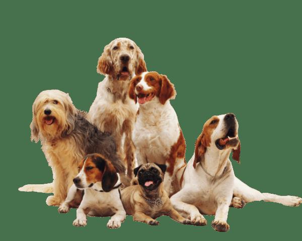 La cantidad de comida que le tienes que dar a tu perro