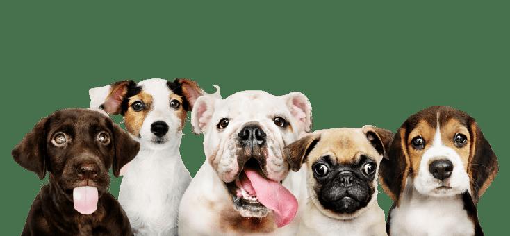 Cantidad de comida para perros
