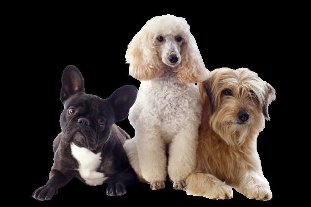 Cantidad de comida para perro y su actividad